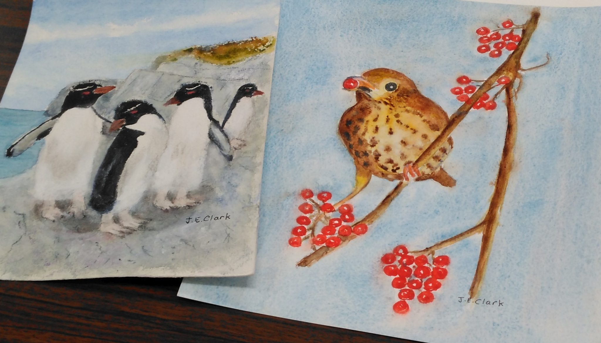Two watercolours, one of penguins and one of a redwing eating berries.