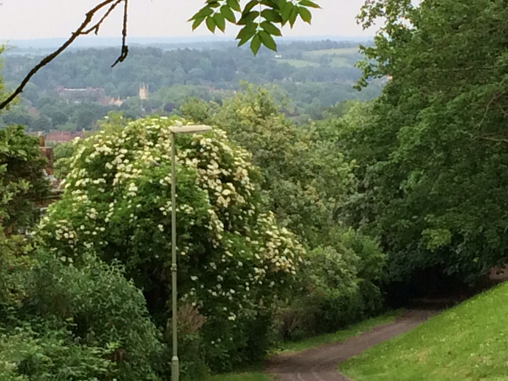 Distant view of Winchester Cathedral from Badger Farm