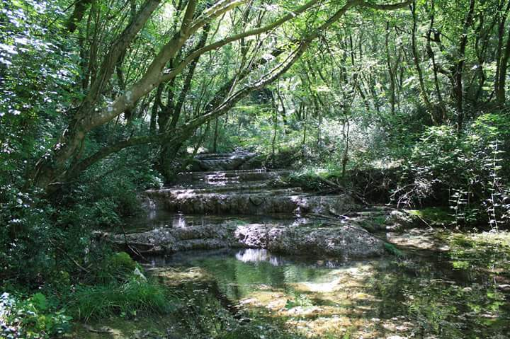 A stream running through woodland