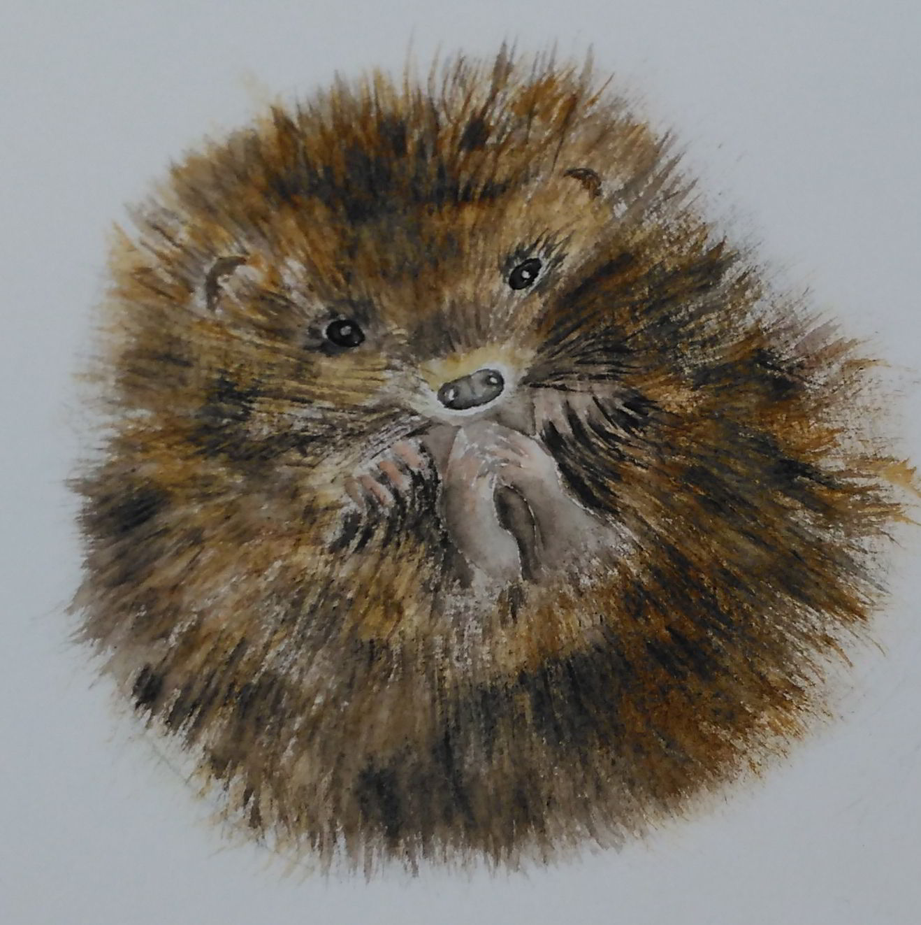 A watercolour painting of a baby hedgehog