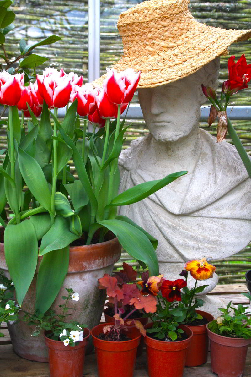 A pot of tulips next to a statue wearing a hat