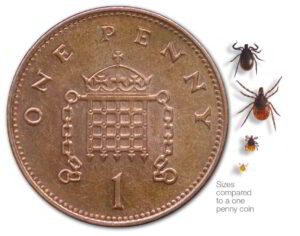Ticks at different life stages, compared in size to a one penny coin.