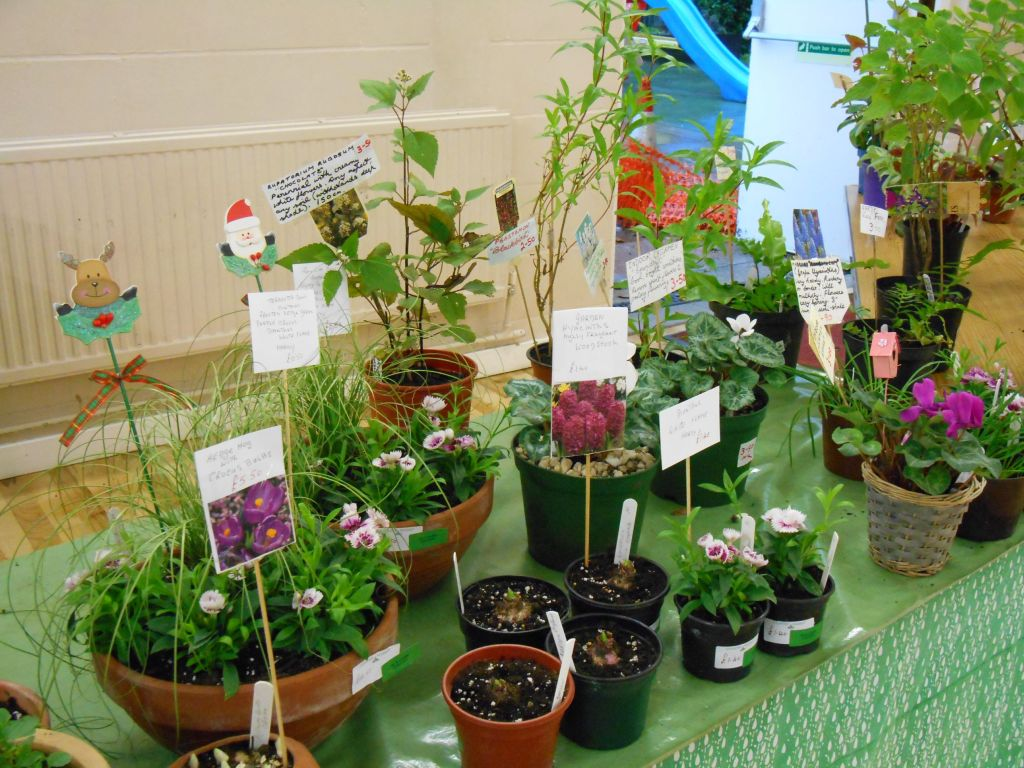 The Country Market plant stall