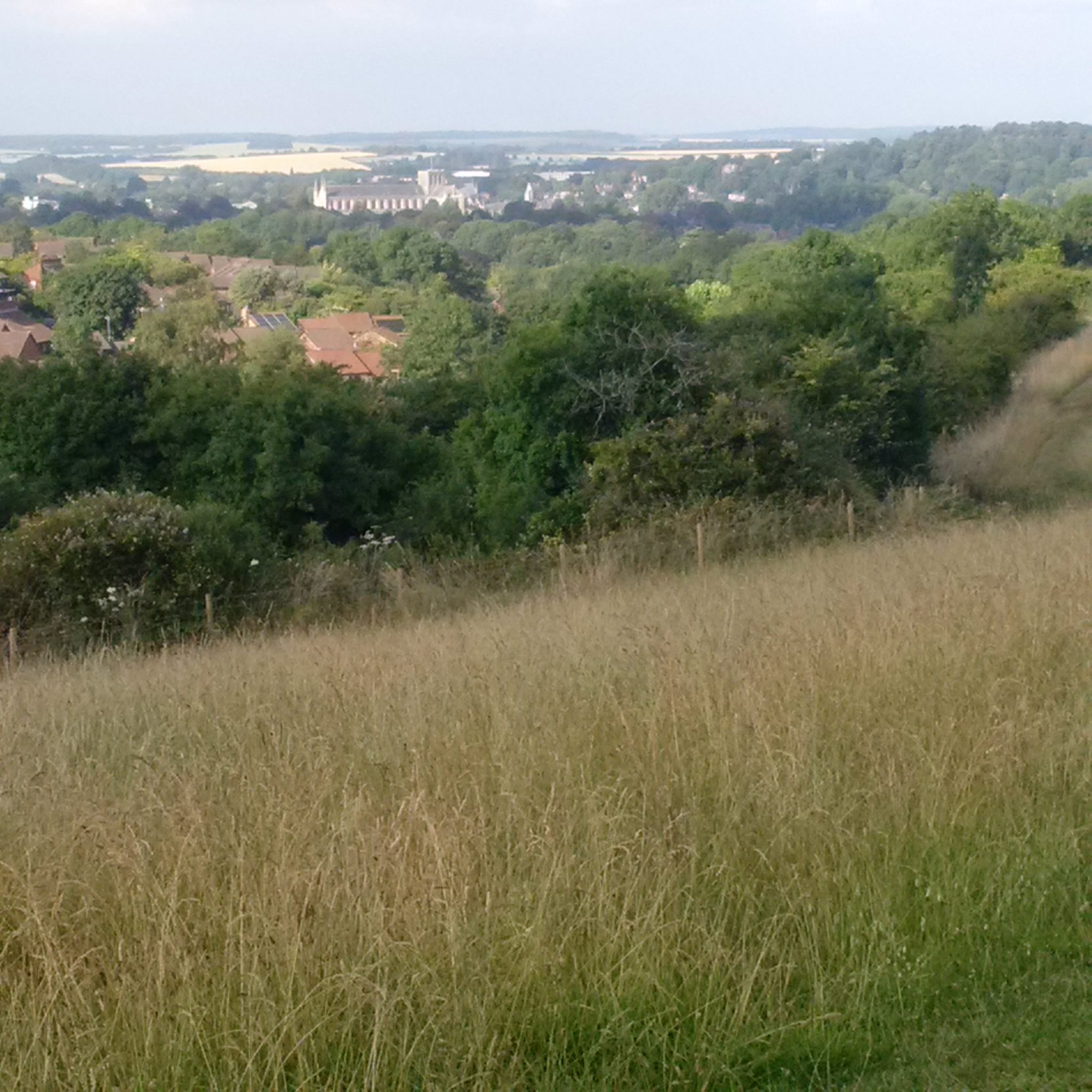 A view of Winchester Cathedral from Whiteshute Ridge