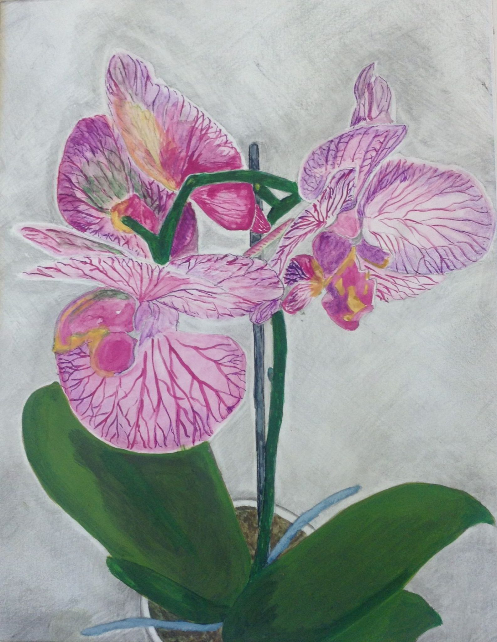 A watercolour painting of an orchid