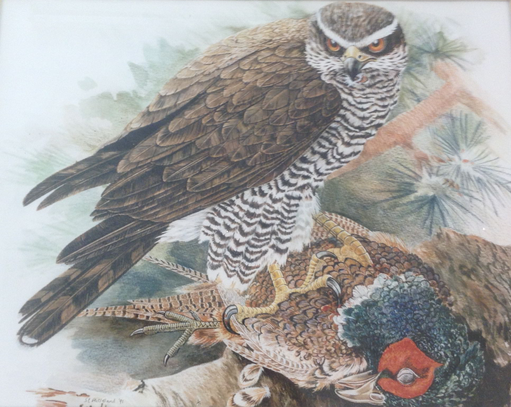 A watercolour painting of a bird or prey standing on a dead pheasant