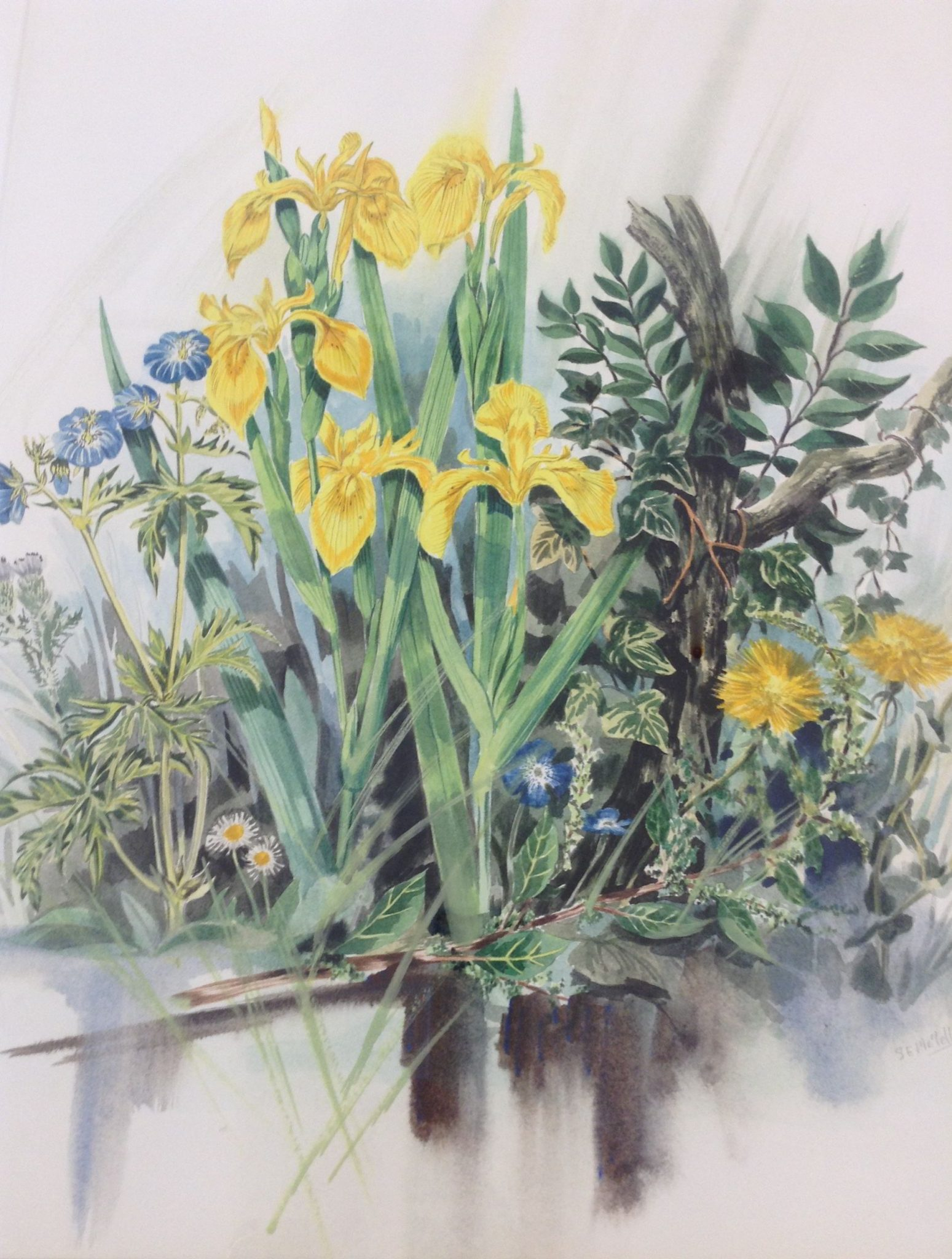 A watercolour painting of yellow iris, ivy and other wild plants