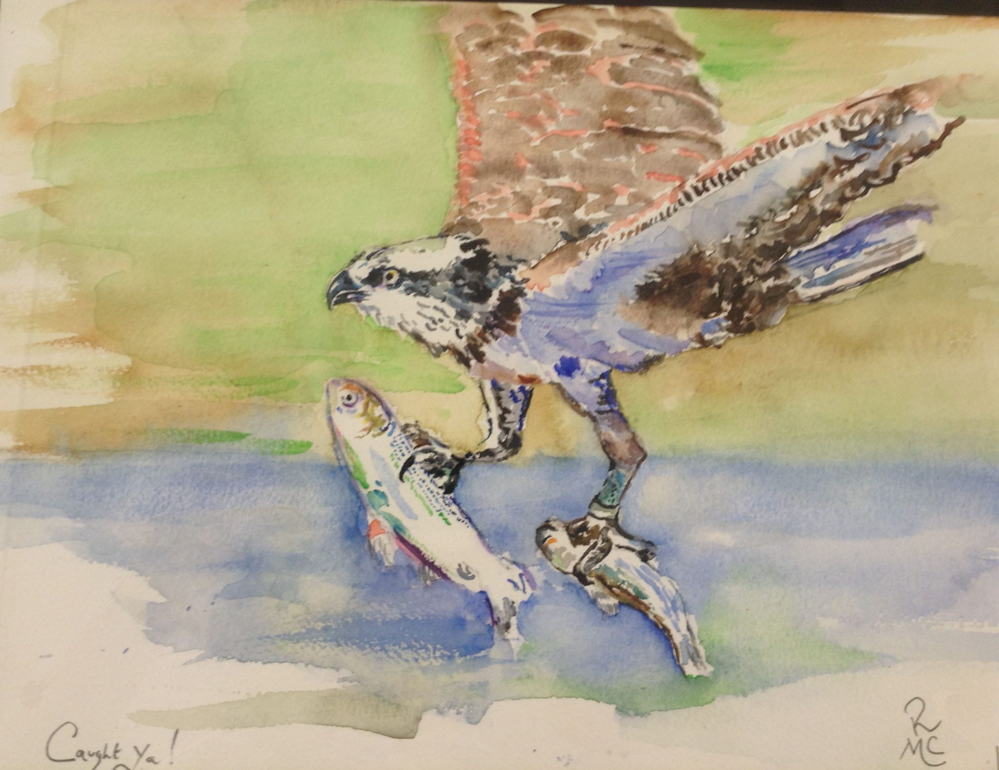 A watercolour painting of a bird of prey with two fish in its talons
